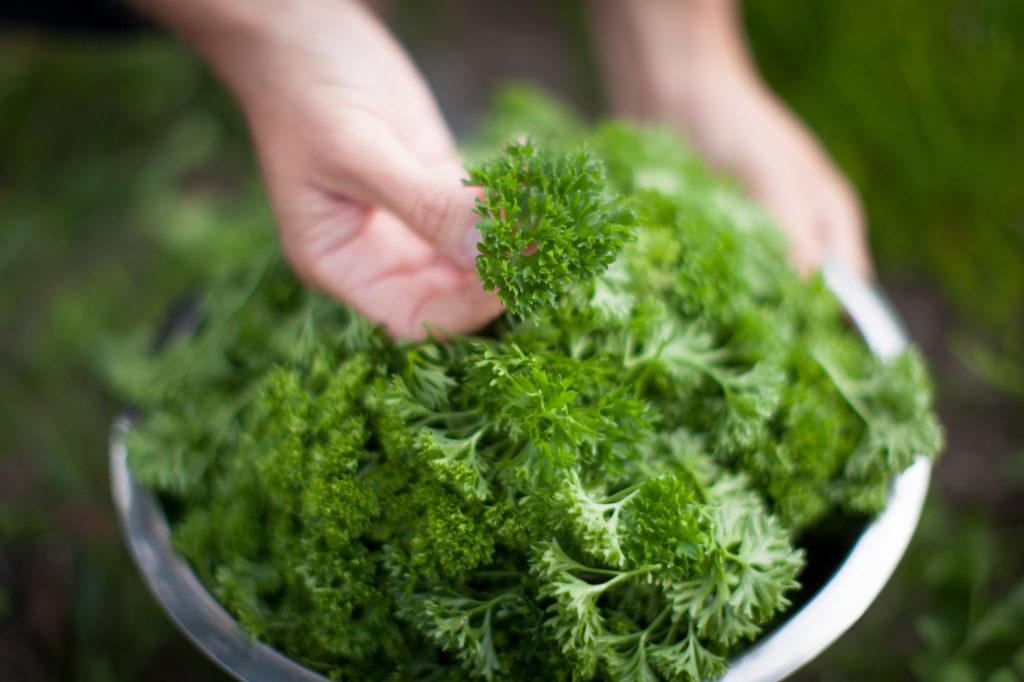ekologisk persilja bunke hand ©_2013_familjereceptet.se